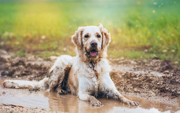 Dog Muddy and Happy