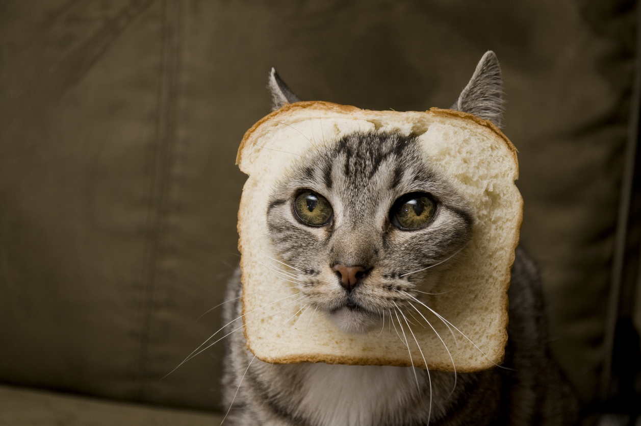 cat in bread