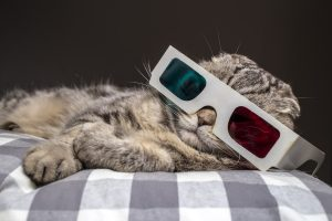 funny scottish fold cat watching a movie on television in 3D glasses lying on a pillow on the sofa